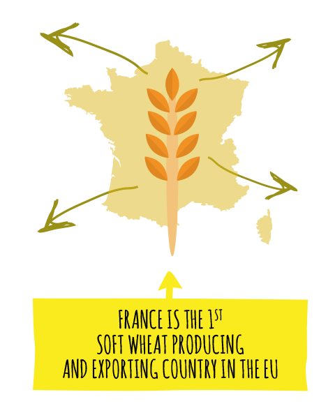 FRANCE IS THE 1ST SOFT WHEAT PRODUCING AND EXPORTING COUNTRY IN THE EU
