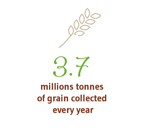 4 M TONNES OF GRAIN COLLECTED EVERY YEAR